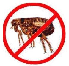 No-Fleas