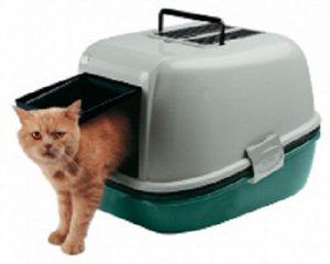 ארגז חול לחתולים