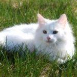 איך תהנה לגדל חתול מטופח עם פחות נשירה וכדורי שיער ?