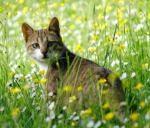 תמונה של חתול בטבע