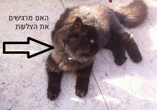 איך נדע שהחתול שמן