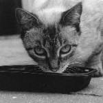 חתול בררן לכבוד יום המזון הבינלאומי