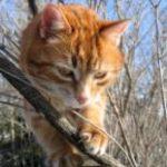 איך נשמור על החתול בחורף