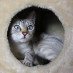 למה חתול פוחד מרעש ואיך נעזור לו להתגבר
