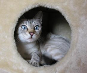 cat-af