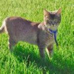 למה חתולים אוכלים דשא