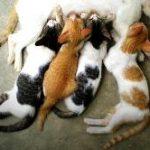 האם לעקר חתולים כן או לא?