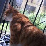 איך נותנים לחתול לצאת החוצה בקלות ובבטחון