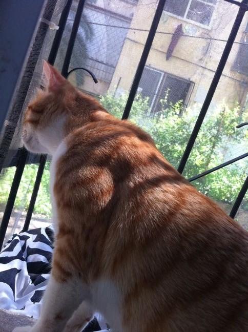 חתול בית רוצה להיות חתול חצר