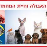 האם החתול יכול להדבק מאבולה?