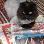 חופשה בלי החתול-מאמר 4 מה עושים לפני